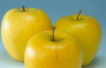 Afbeelding Appel 'Golden Delicious' - Malus domestica 'Golden Delicious'