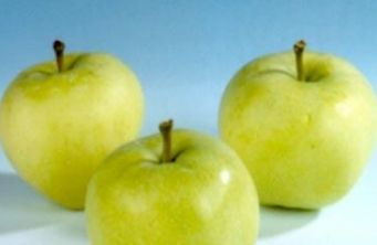 "Afbeelding Appel ""Yellow Transparent"" - Malus domestica 'Yellow Transparent'"