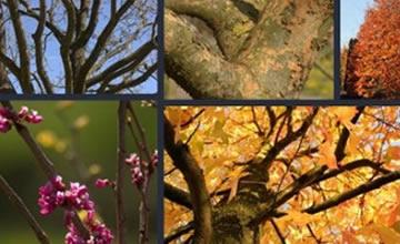 Ondersteunende afbeelding voor categorie exclusieve bomen