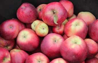 Afbeelding Appel 'Gloster' - Malus domestica 'Gloster'